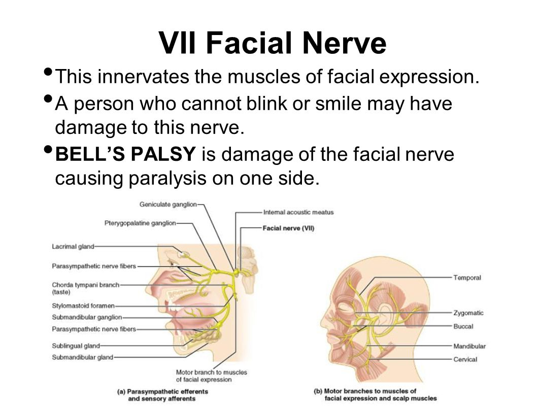 VII Facial Nerve This innervates the muscles of facial expression.