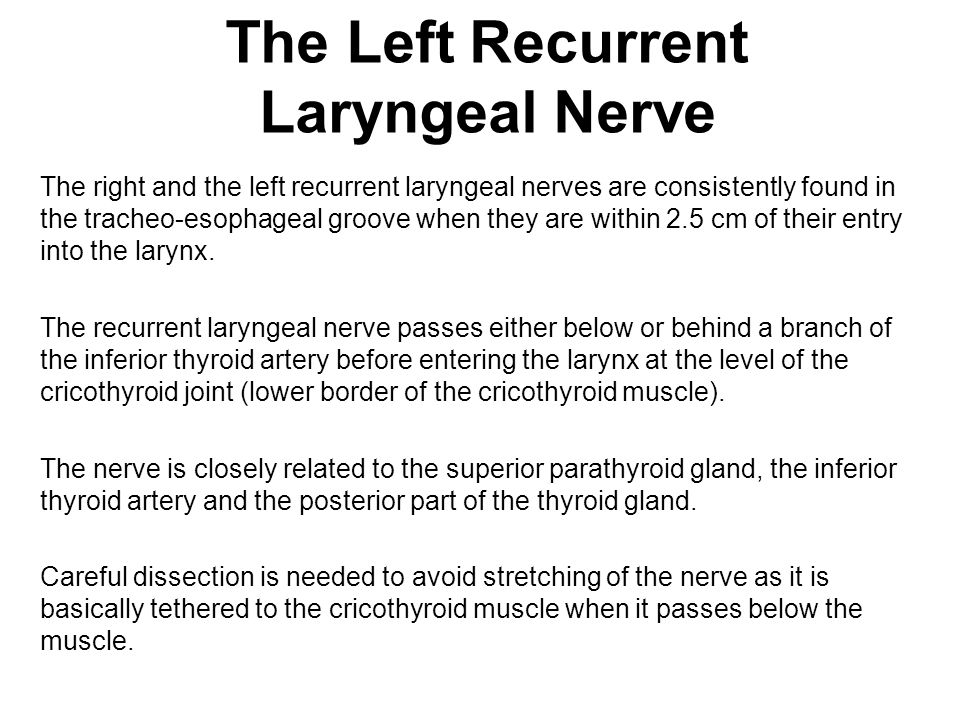 The Left Recurrent Laryngeal Nerve