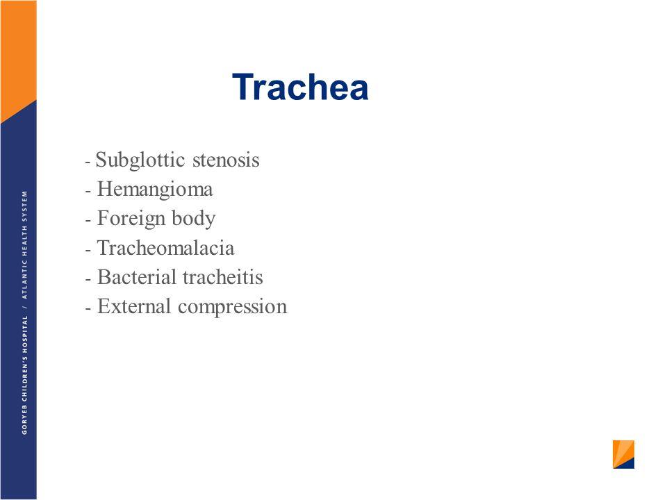 Trachea Hemangioma Foreign body Tracheomalacia Bacterial tracheitis