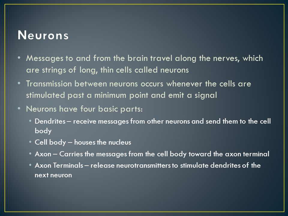 Neurons Messages to and from the brain travel along the nerves, which are strings of long, thin cells called neurons.