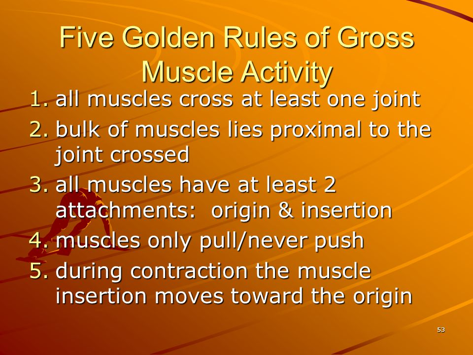 Five Golden Rules of Gross Muscle Activity