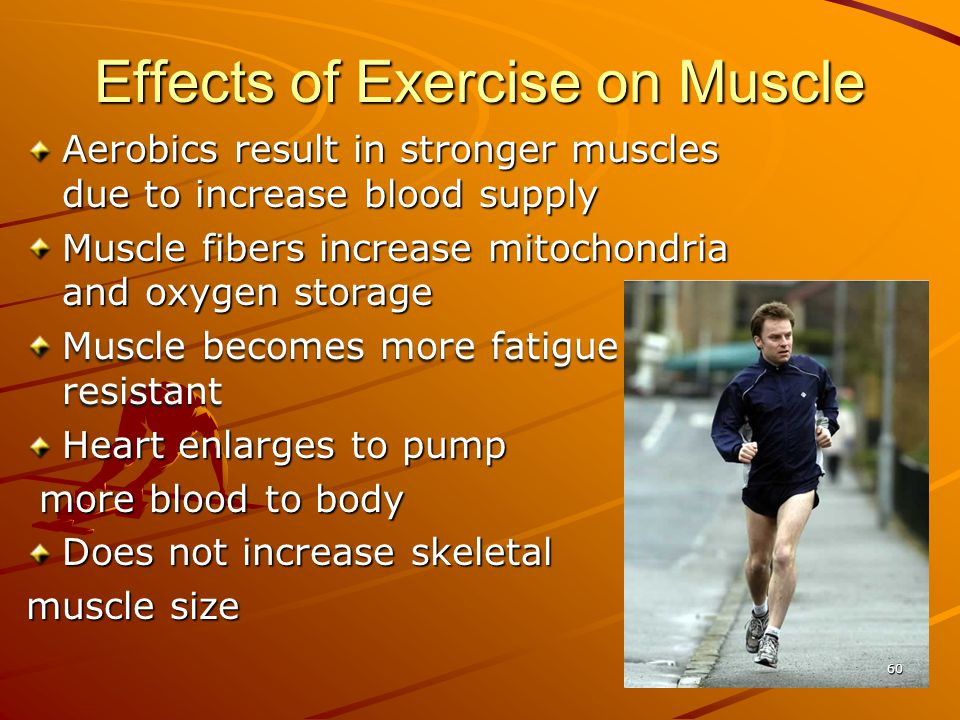Effects of Exercise on Muscle