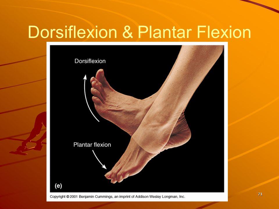 Dorsiflexion & Plantar Flexion