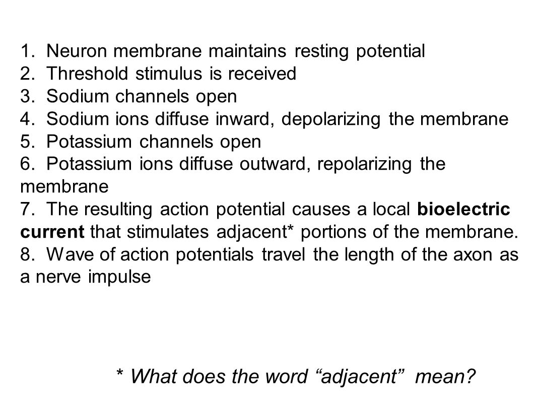 * What does the word adjacent mean