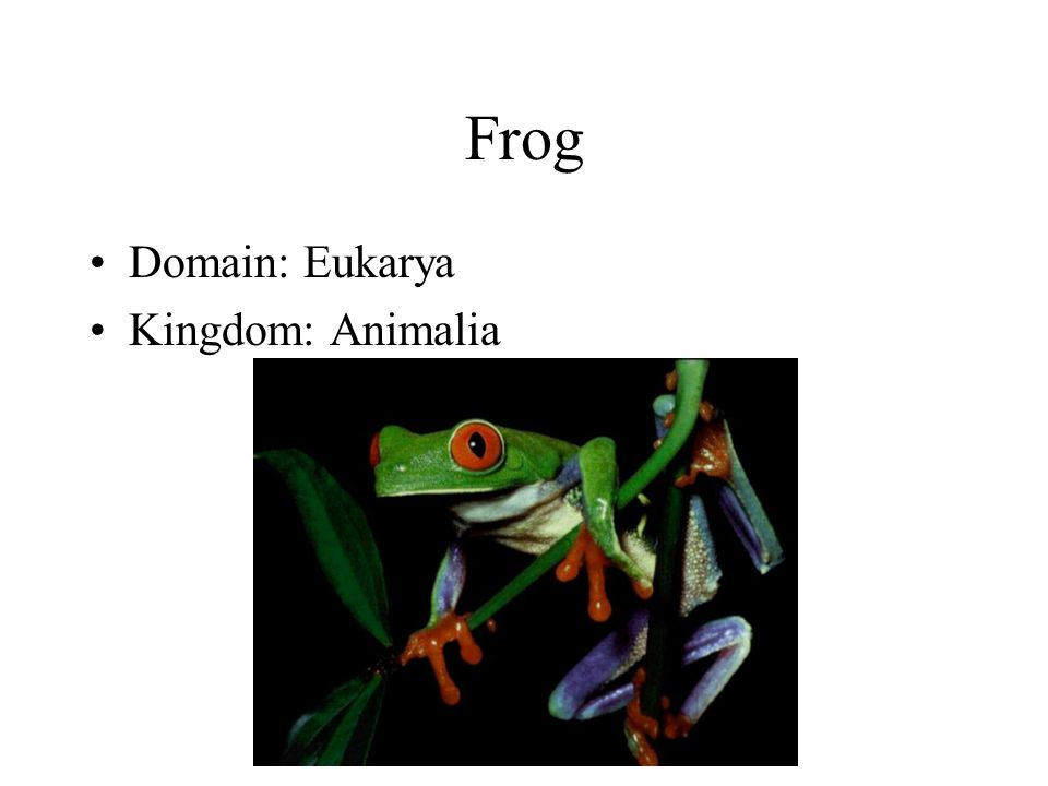 Frog Domain: Eukarya Kingdom: Animalia