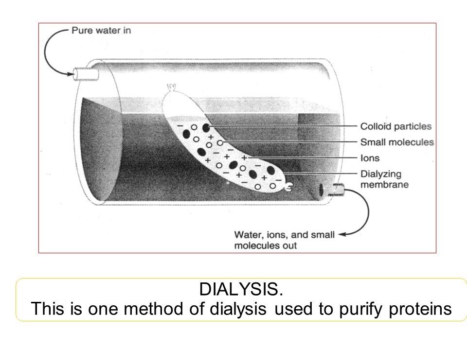 DIALYSIS. This is one method of dialysis used to purify proteins
