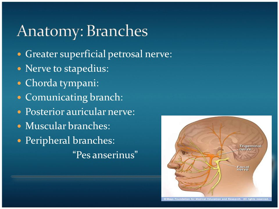 Anatomy: Branches Greater superficial petrosal nerve:
