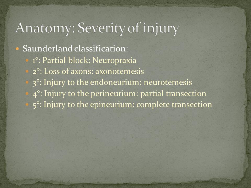 Anatomy: Severity of injury