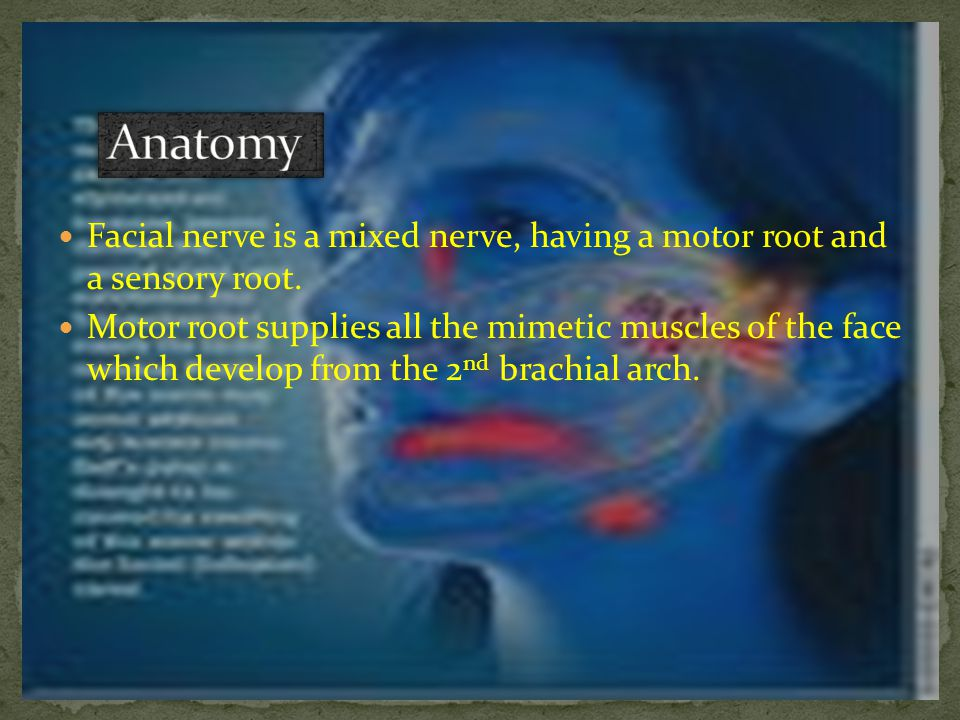 Anatomy Facial nerve is a mixed nerve, having a motor root and a sensory root.