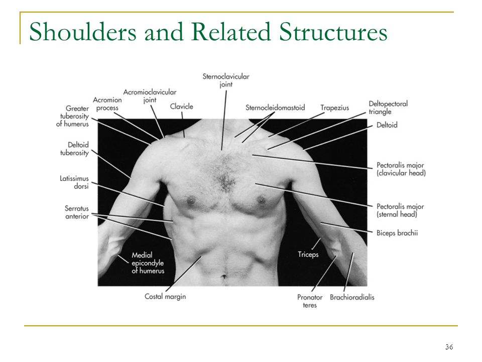 Shoulders and Related Structures