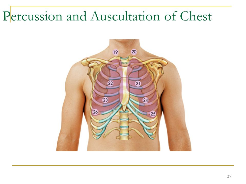 Percussion and Auscultation of Chest