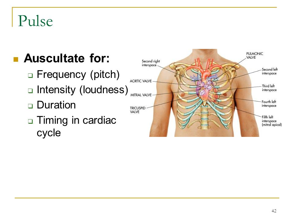 Pulse Auscultate for: Frequency (pitch) Intensity (loudness) Duration