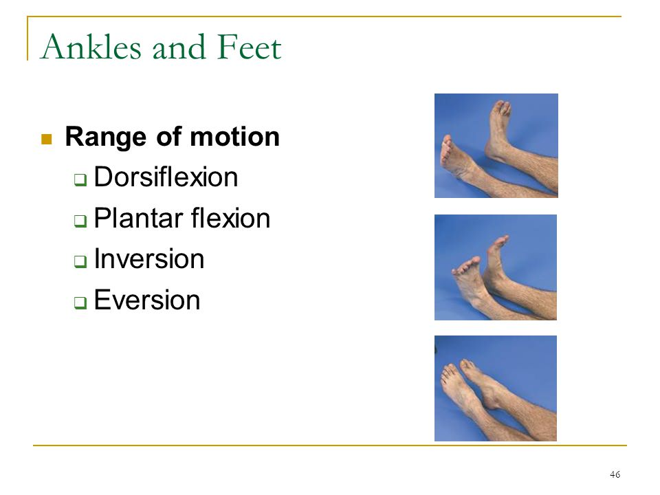 Ankles and Feet Dorsiflexion Plantar flexion Inversion Eversion