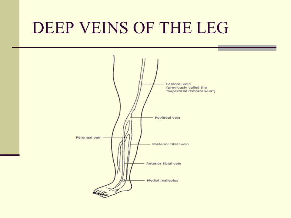 DEEP VEINS OF THE LEG