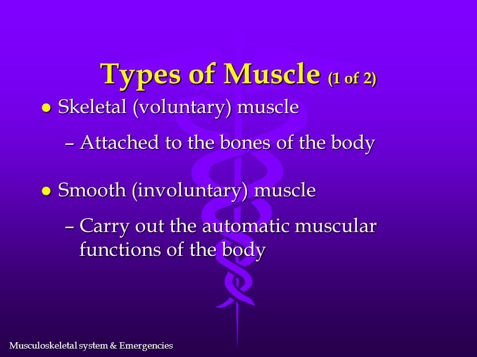 Types of Muscle (1 of 2) Skeletal (voluntary) muscle