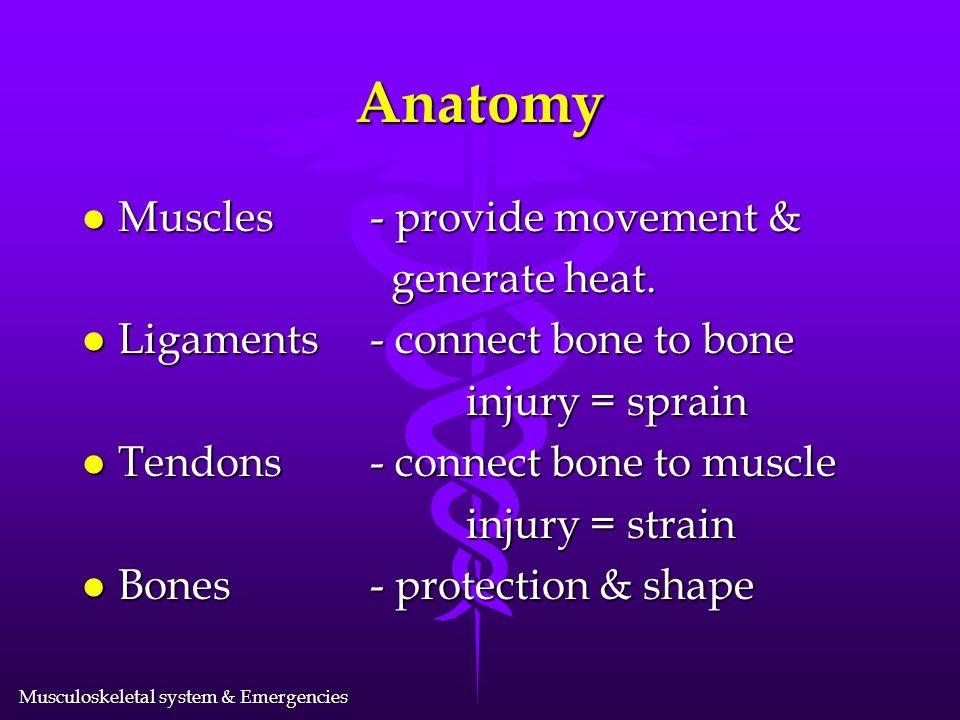 Anatomy Muscles - provide movement & generate heat.