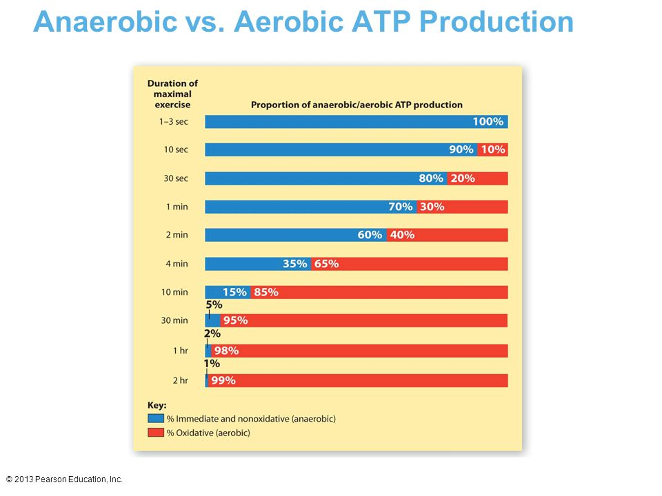 Anaerobic vs. Aerobic ATP Production
