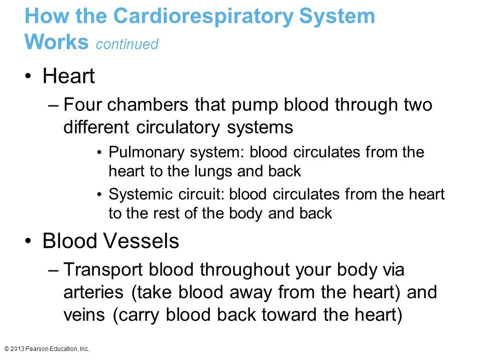 How the Cardiorespiratory System Works continued