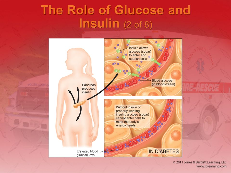 The Role of Glucose and Insulin (2 of 8)