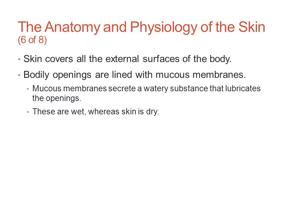 The Anatomy and Physiology of the Skin (6 of 8)