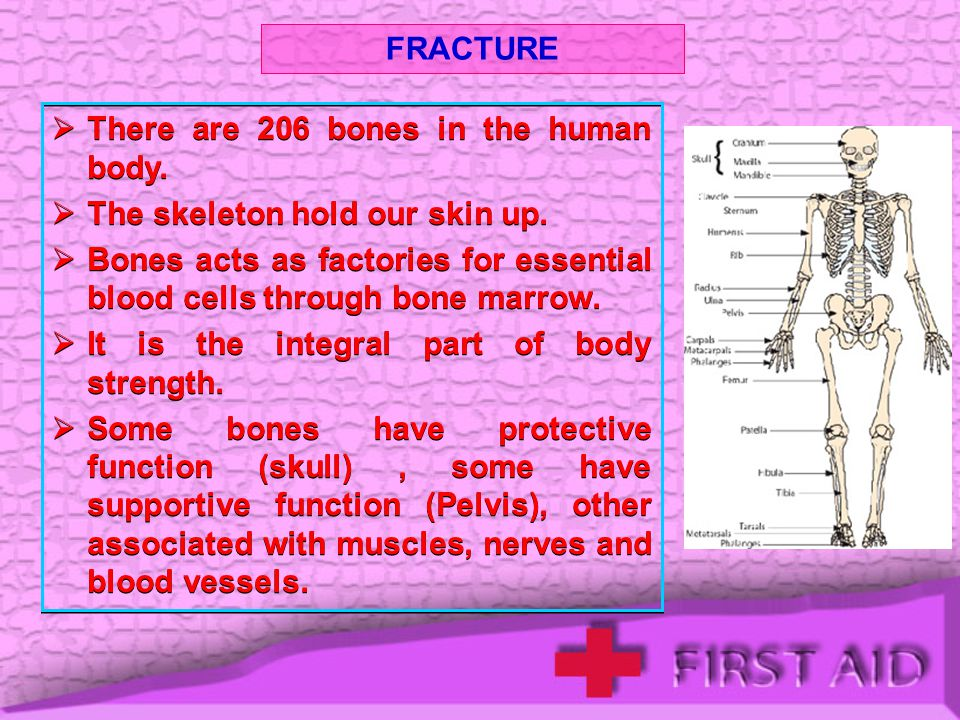 FRACTURE There are 206 bones in the human body. The skeleton hold our skin up.