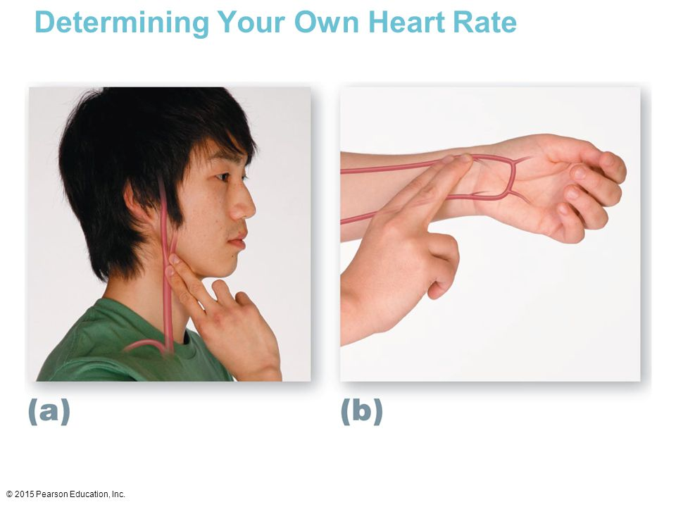 Determining Your Own Heart Rate