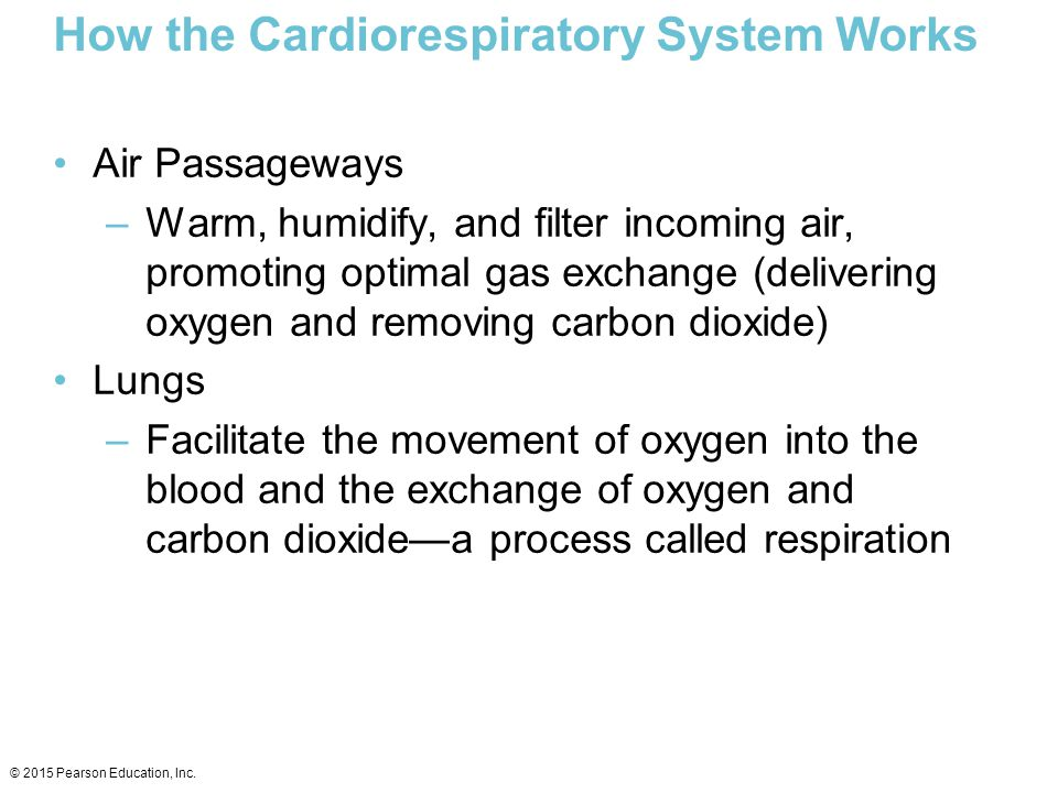 How the Cardiorespiratory System Works