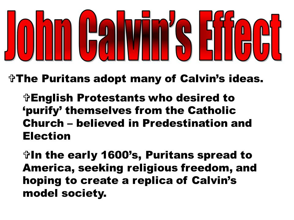 John Calvin's Effect The Puritans adopt many of Calvin's ideas.