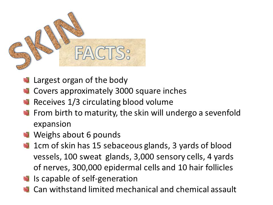 SKIN FACTS: Largest organ of the body