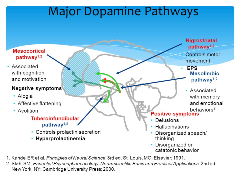 Major Dopamine Pathways