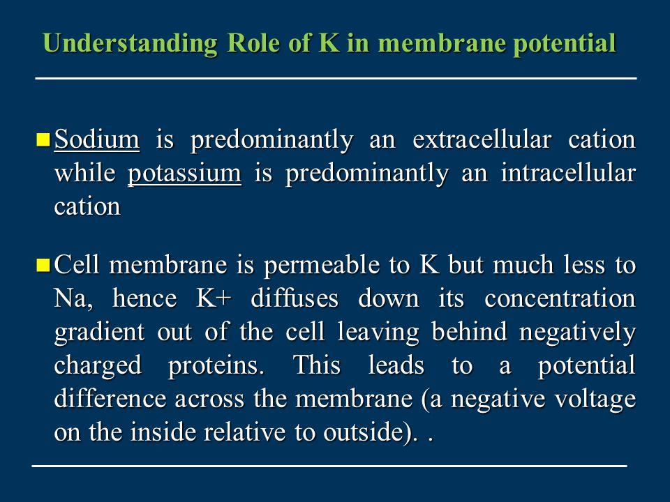 Understanding Role of K in membrane potential
