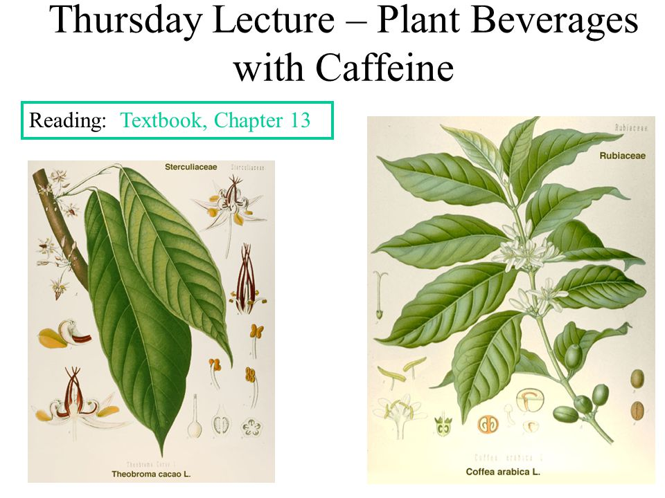 Thursday Lecture – Plant Beverages with Caffeine