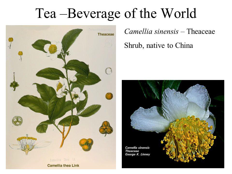 Tea –Beverage of the World