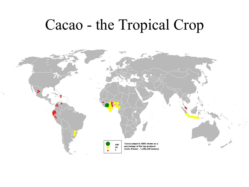 Cacao - the Tropical Crop