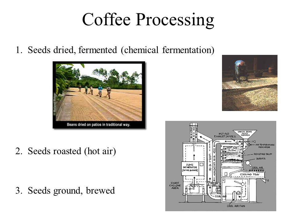Coffee Processing 1. Seeds dried, fermented (chemical fermentation)