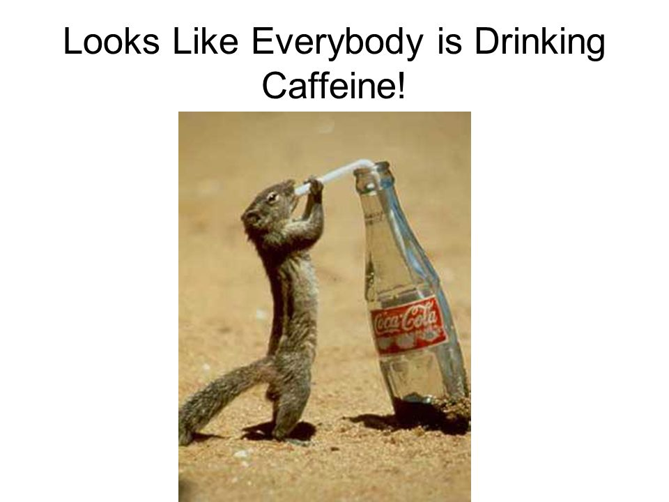 Looks Like Everybody is Drinking Caffeine!