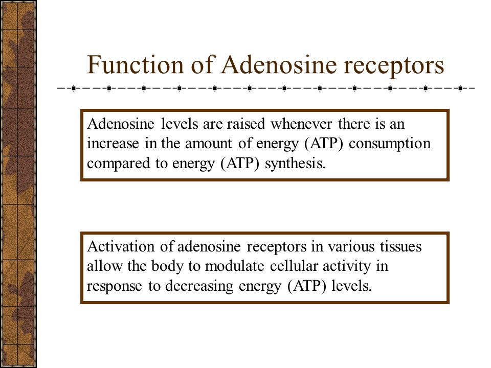 Function of Adenosine receptors