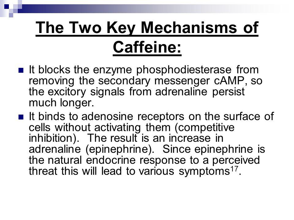 The Two Key Mechanisms of Caffeine:
