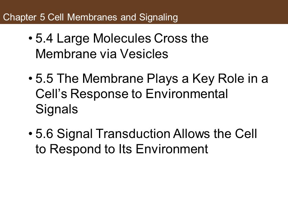 Chapter 5 Cell Membranes and Signaling