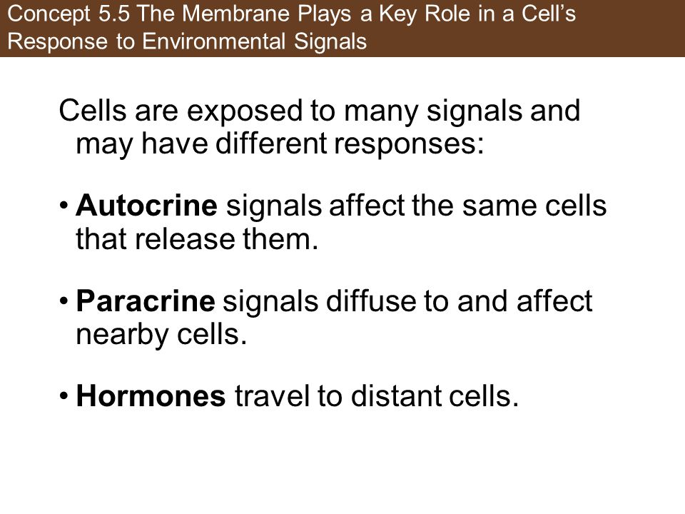 Cells are exposed to many signals and may have different responses: