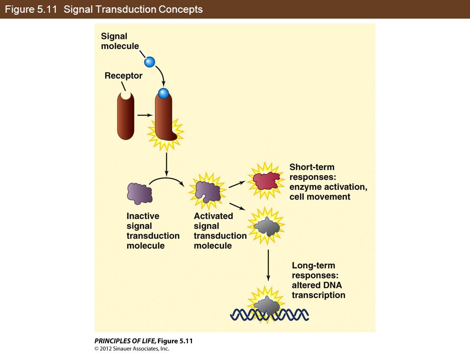 Figure 5.11 Signal Transduction Concepts