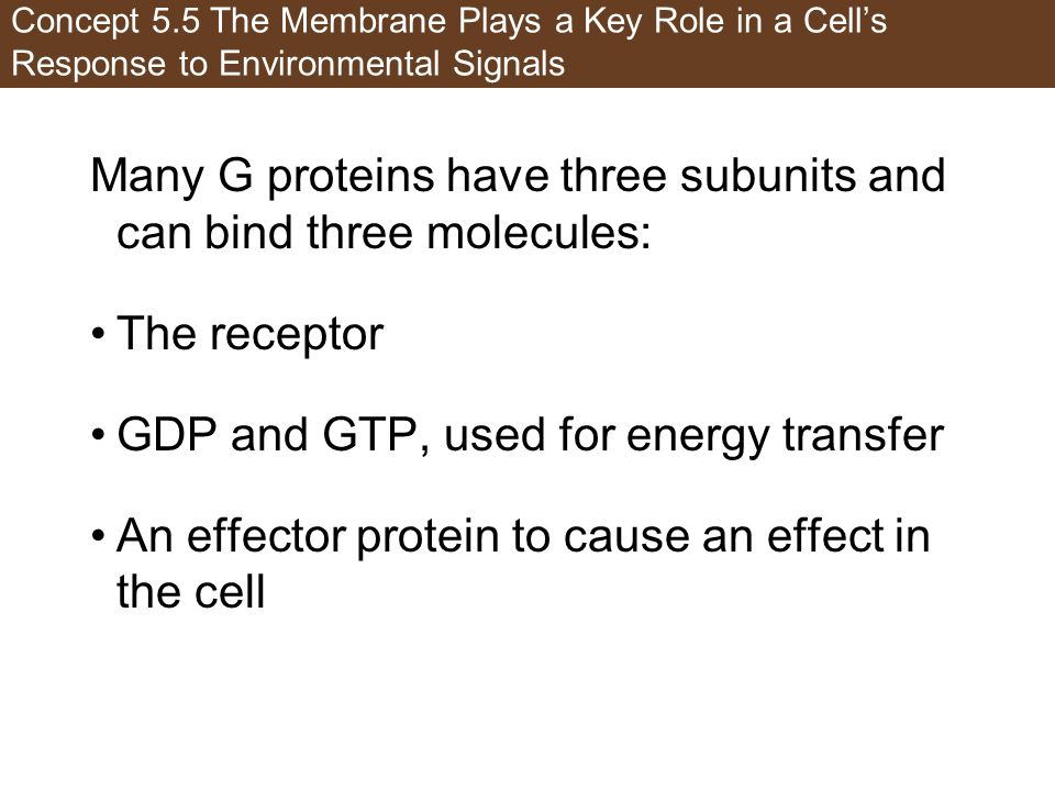 Many G proteins have three subunits and can bind three molecules: