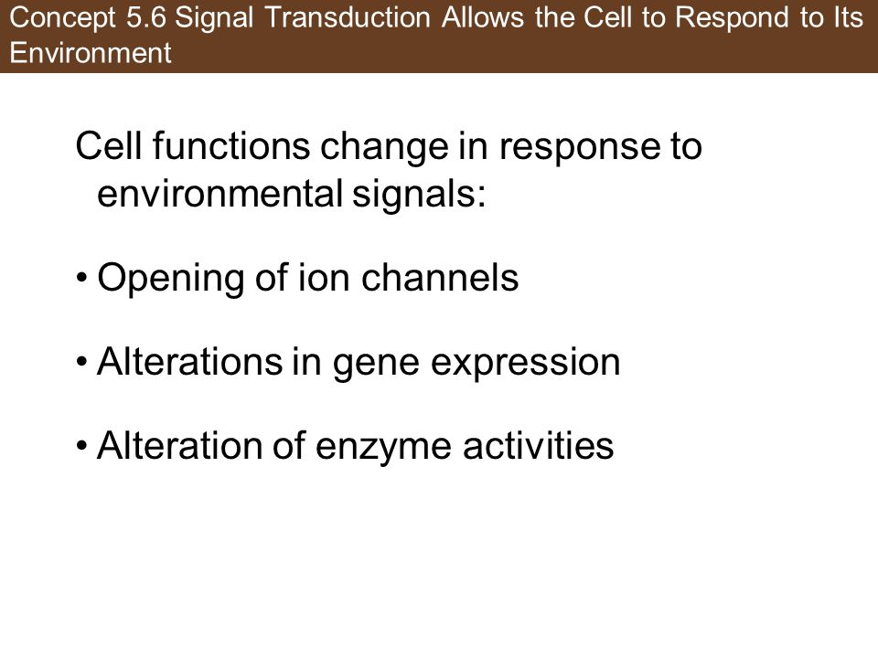 Cell functions change in response to environmental signals: