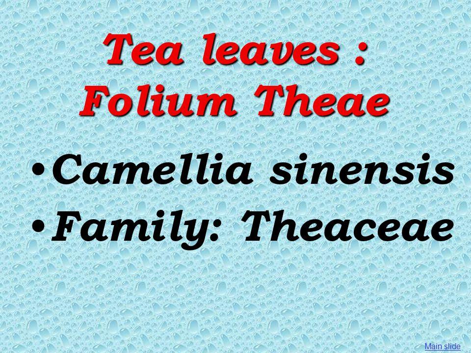 Tea leaves : Folium Theae