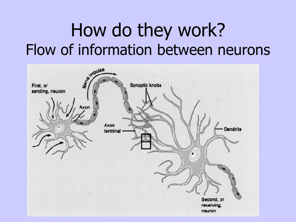 How do they work Flow of information between neurons