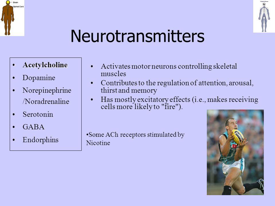 Neurotransmitters Acetylcholine