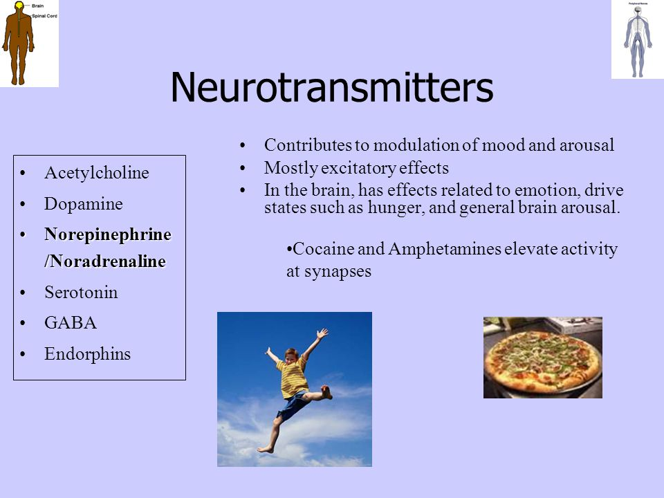 Neurotransmitters Contributes to modulation of mood and arousal