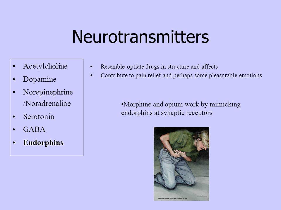 Neurotransmitters Acetylcholine Dopamine Norepinephrine /Noradrenaline