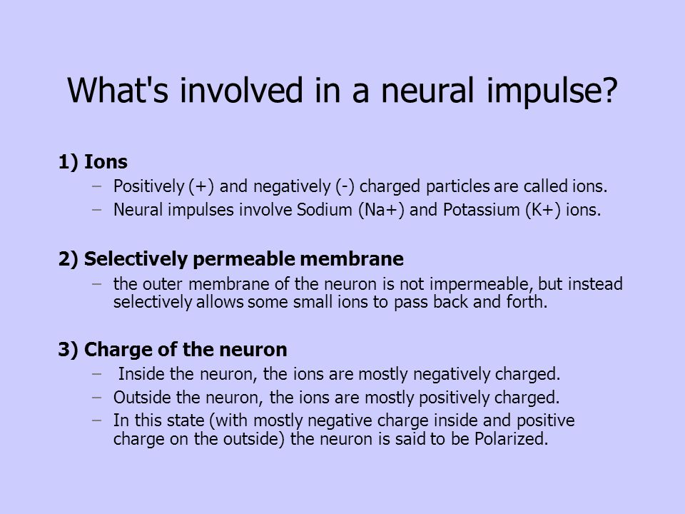 What s involved in a neural impulse