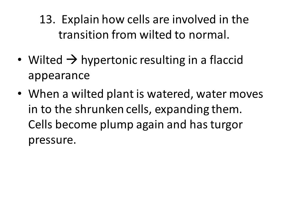 13. Explain how cells are involved in the transition from wilted to normal.